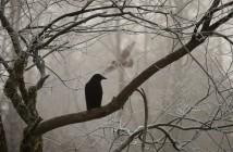el-cuervo-poe-e1516083315209